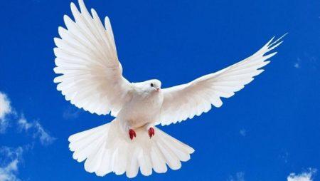 Mơ thấy chim sẻ, bồ câu, công… đánh đề con gì? Là điềm lành hay dữ?